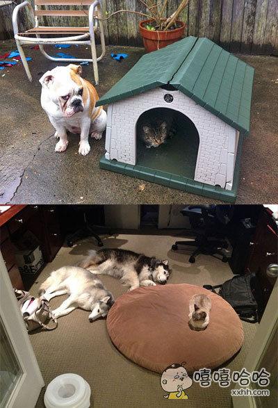 喵星人用实际行动告诉你:在这个家里我是老大,我爱在哪儿就在哪儿,你不服你出去。