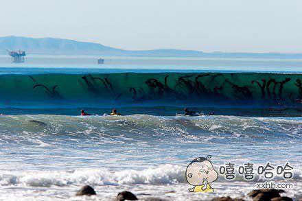 虽然是再普通不过的海草,但从这个角度看也太瘆人了,直接诱发了我的深海恐惧症