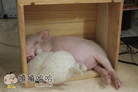 你们快看啊,我家的猪敲可爱!