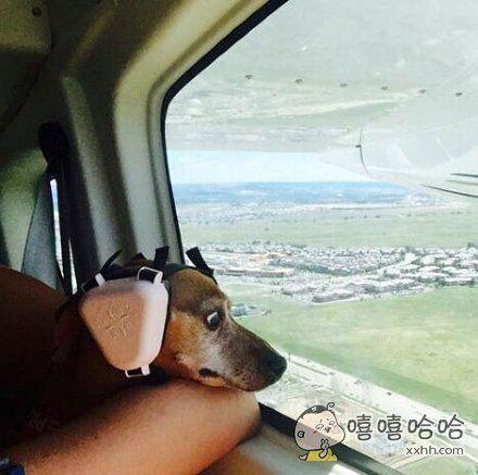 狗狗第一次坐飞机。