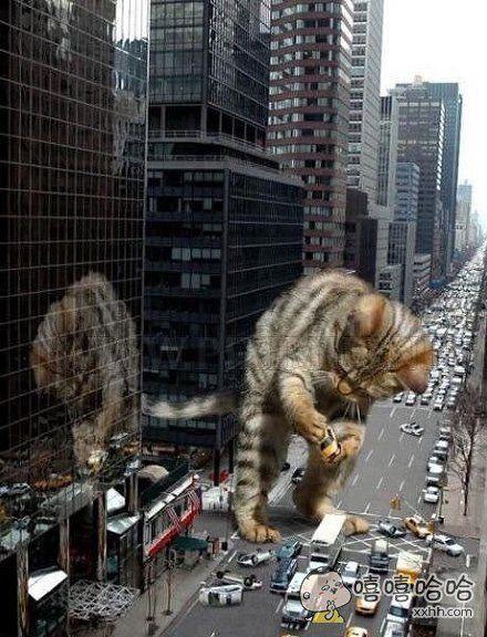 如果猫可以长到这个体型……
