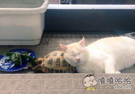 朕就枕着乌龟睡觉了?咋滴?