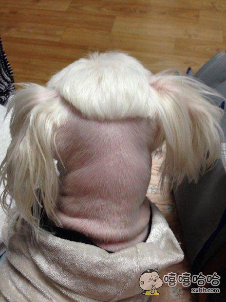 一位网友带着自己家的狗去做了次美容,然后……狗狗从此拒绝直视镜头……