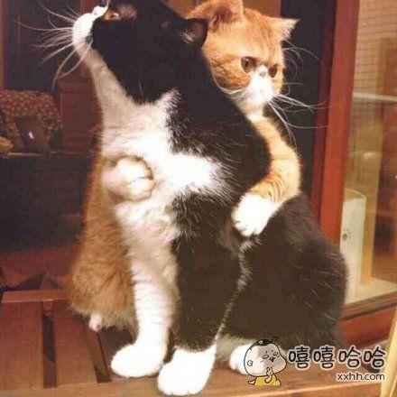 亲爱的,别忧桑,有我陪你一起胖