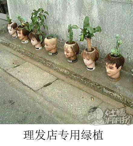 理发店专用绿植