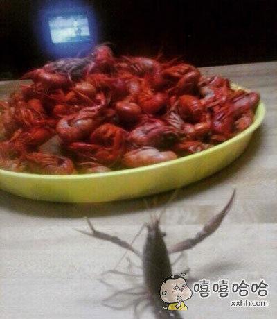 一网友被一只小龙虾夹了手,于是灭了它的门,还让它亲眼看着