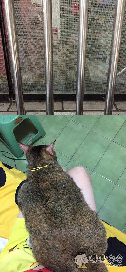 网友每次路过邻居家都被窗户后面一张猫脸吸引,感觉好可爱呦!后来忍不住敲门进去看到本尊,有些差别
