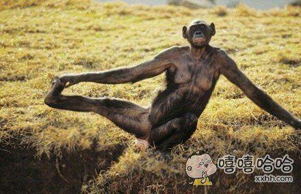"""这只黑猩猩的内心在说:""""我可没有在这里出洋相!这是很认真的拉伸动作!"""""""