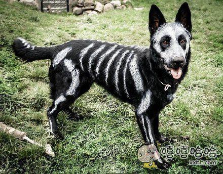 狗:你这个主人我不要了