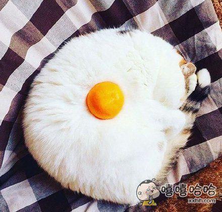饿了的话,就来吃颗荷包蛋吧