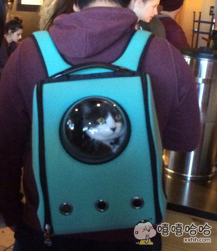 这种遛猫包,我竟然有点喜欢,给你猫带来宇航员般的体验