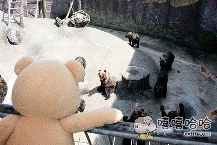 正在做商业活动的泰迪去动物园参观,笼子里的熊都吓傻了
