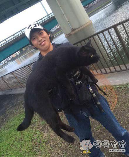 道理我都懂,可为什么猫这么大