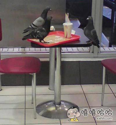 想安安静静吃个快餐,却碰上旁边几只鸽子在搞面试
