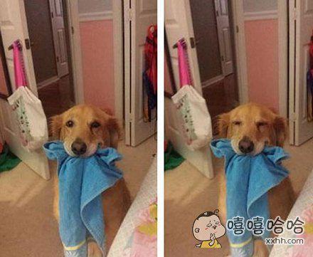 """""""我最喜欢给洗澡的女主人拿浴巾啦!"""""""