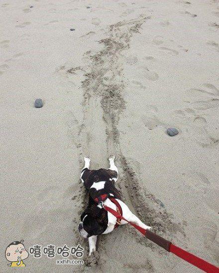 遛出去的狗,泼出去的水!