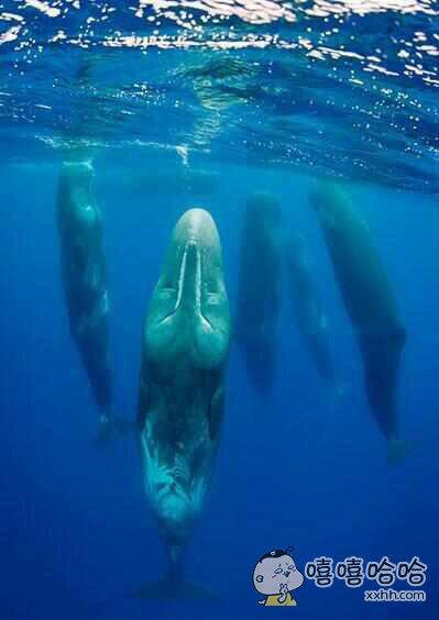 鲸鱼睡觉时的样子