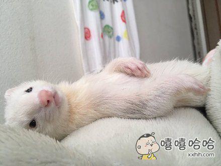 岛国一妹子表示,一觉醒来,发现家里的鼬以这样温柔霸道的姿势躺在了身旁。。。瞬间有一种有男友的错觉