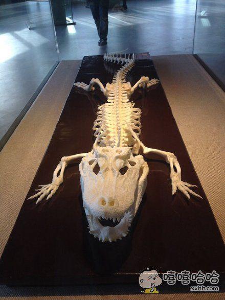 鳄鱼的骨头还挺萌萌哒。。。