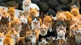 神奇!日本小岛被猫群占领