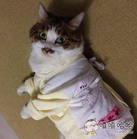 今年生宝宝所以获得了很多小孩儿衣服,老公非要给猫穿穿,看把主子吓的