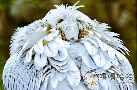 具有浪客剑心气质的鸟,好酷!!