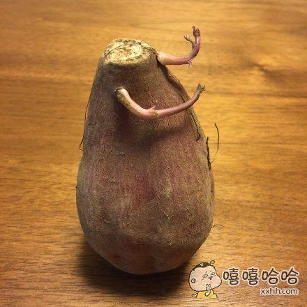 一只有态度的红薯