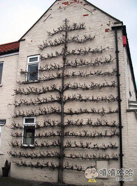 目测这墙有强迫症