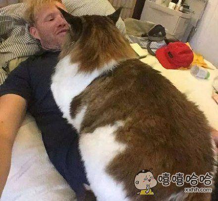 """猫:""""说,我还是不是你的小心肝儿?"""""""