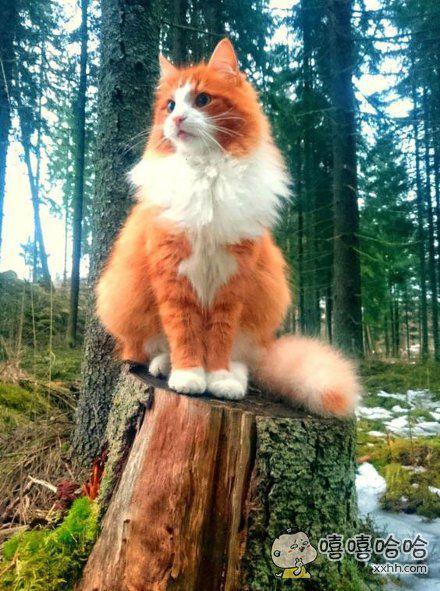 森林护卫!!