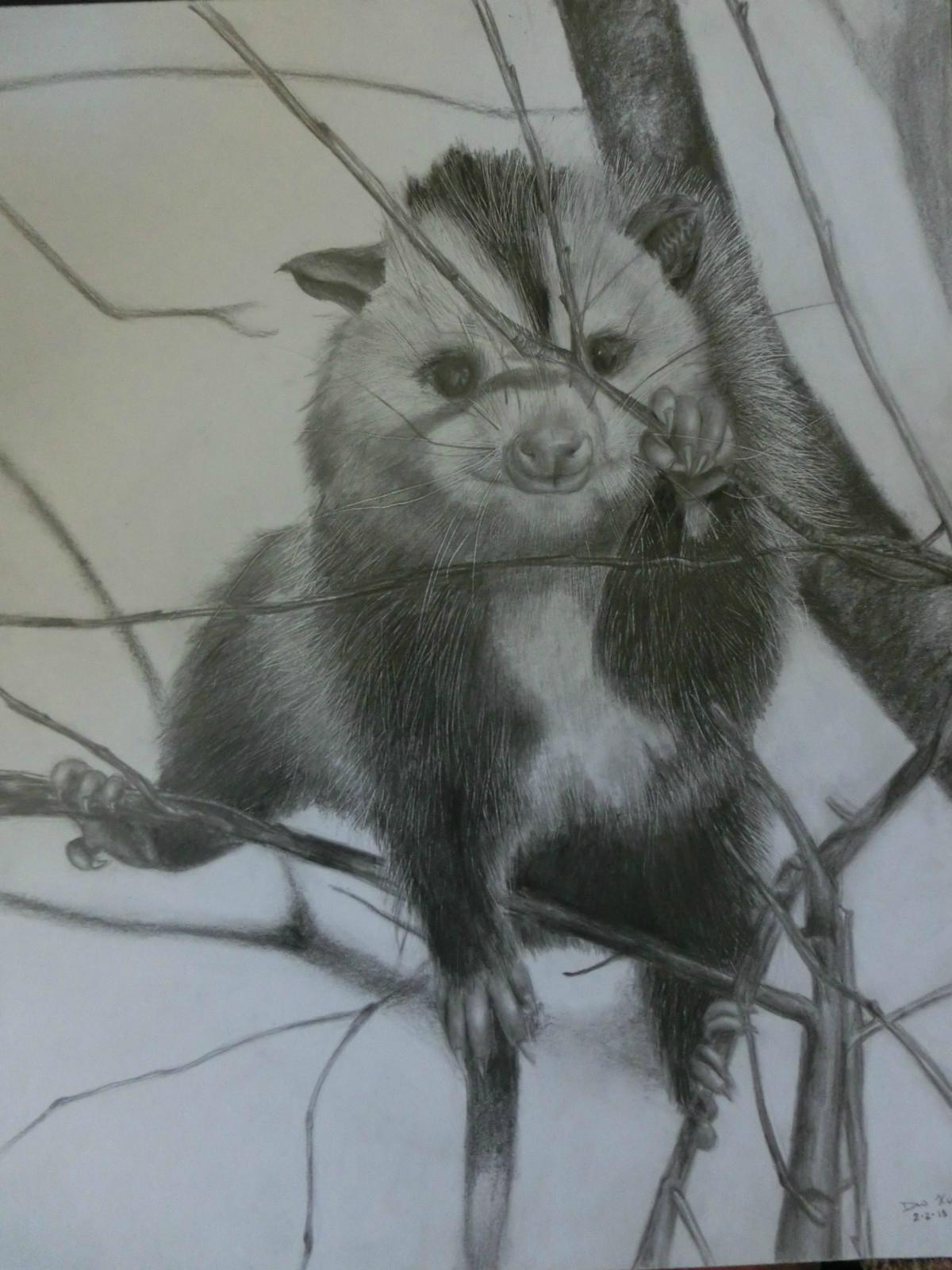 Possum~