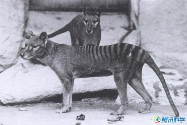 【鲁姬卡】科学家们试图复活的24种灭绝动物