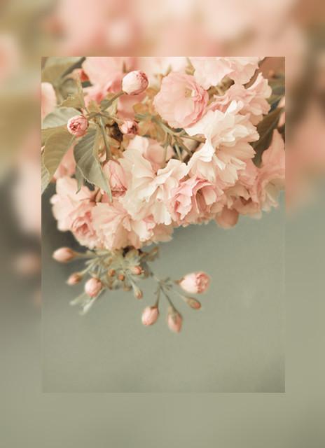 透明花朵分割线素材