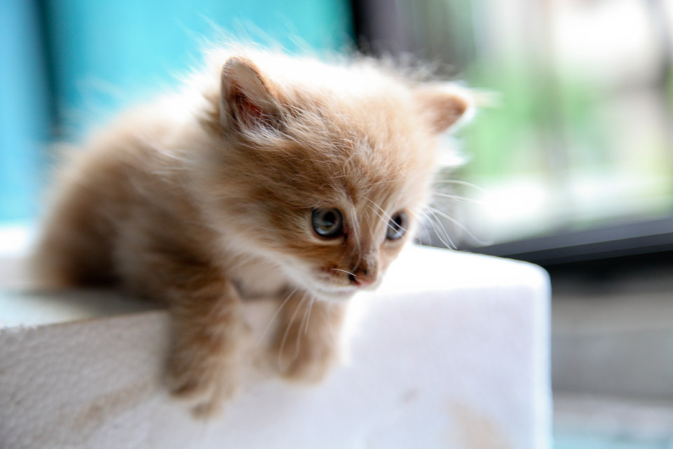 壁纸 动物 猫 猫咪 小猫 桌面 960_640