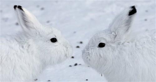 【转】盘点那些可爱但濒临灭绝的动物