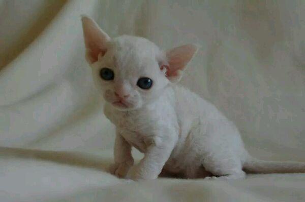 pet丶丁丁°猫咪大全
