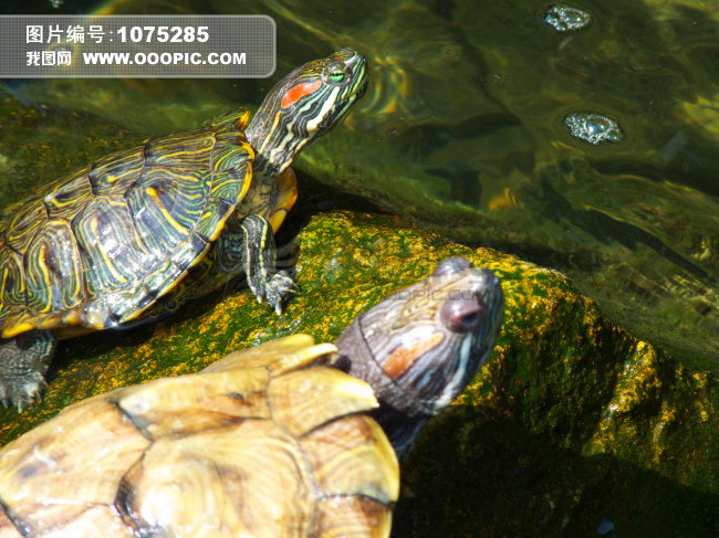 【】爱乌龟的都来呀,可爱萌龟图