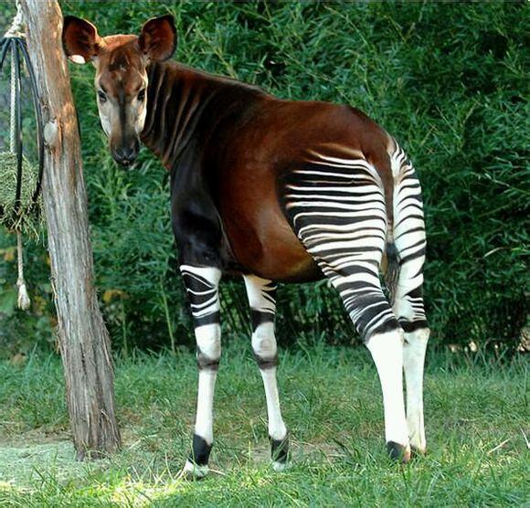 【阿紫】这些长发飘飘的动物是不是超级可爱?