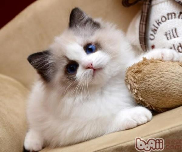 壁纸 动物 猫 猫咪 小猫 桌面 600_502