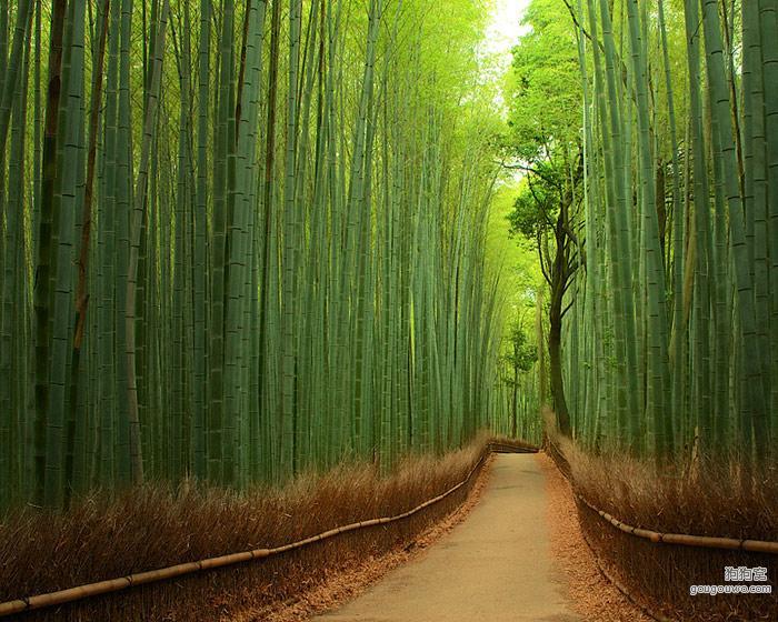 最漂亮的竹林,小径两侧矗立有青翠笔直的竹子,俨然一个绿色竹林的世界