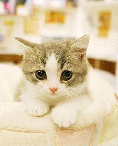 壁纸 动物 猫 猫咪 小猫 桌面 450_558 竖版 竖屏 手机