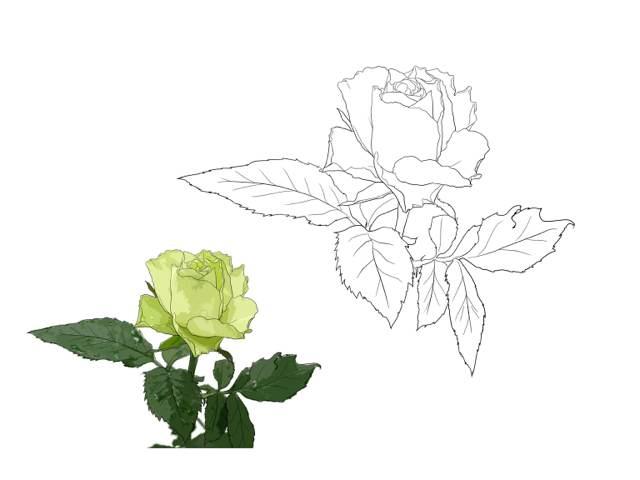 蔷薇花怎么画步骤