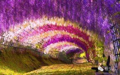 漫天的紫藤萝花,把一把椅子,在紫藤萝瀑布中,闭上双眼,享受着属于你