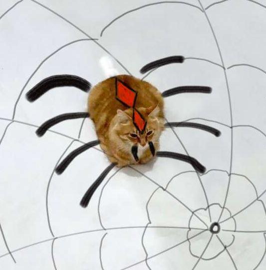 +几笔画出最创意猫咪图片