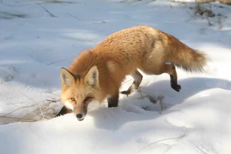 【万有理论】测试什么动物代表你@瞳瞳加入